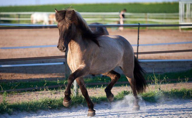 Ehemalige Verkaufspferde
